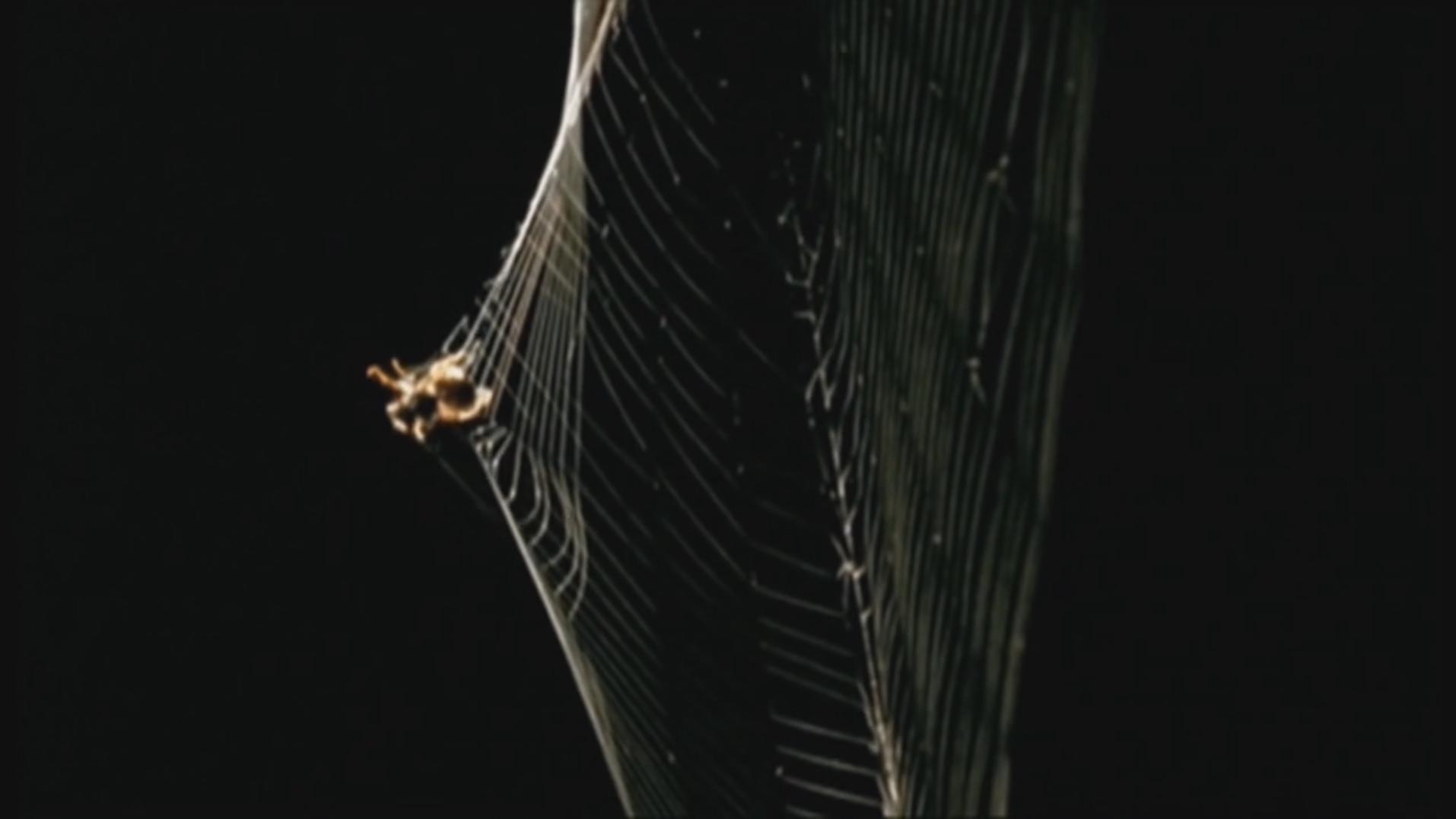 Les grandes enquêtes scientifiques: «Comment créer des super matériaux en s'inspirant des araignées» au Coeur des sciences